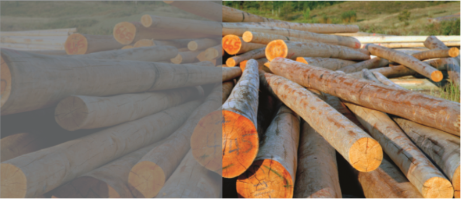 The European Timber Regulation Your Legal Responsibility 2