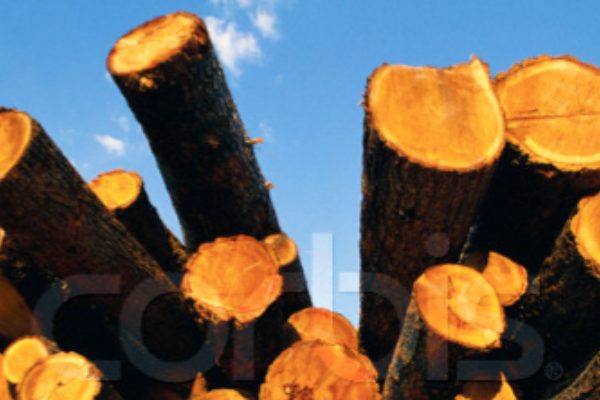 The European Timber Regulation - your legal responsibility