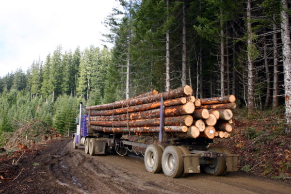 Sustainable Forestry & PEFC scheme updates​ - January 2017