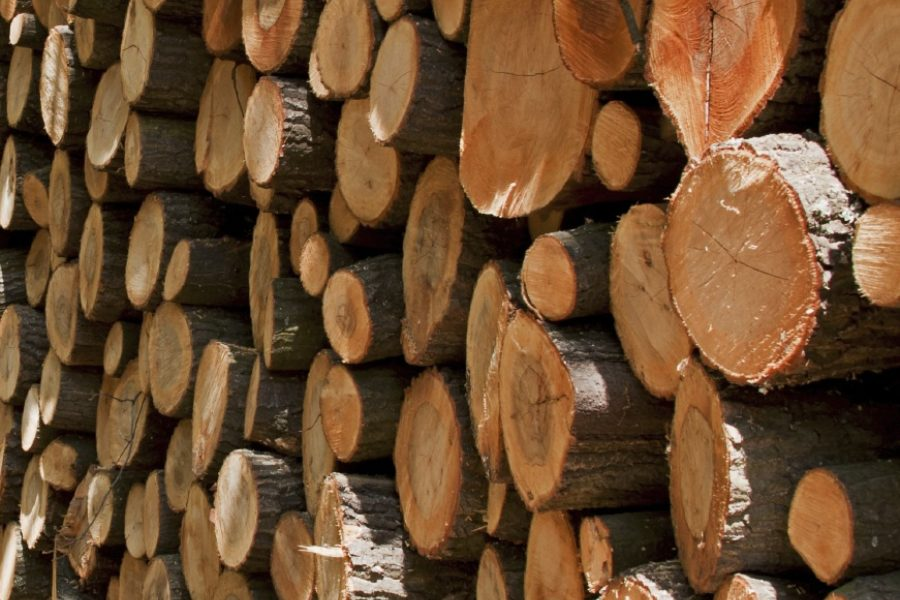 Biomass Subsidies and their impact on the British Furniture Industry