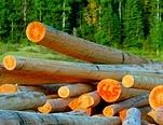 EU Timber Regulations