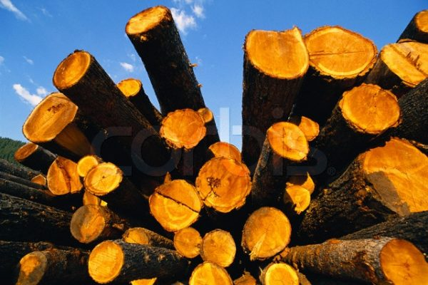 Sustainable Forestry & PEFC scheme updates